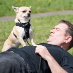 Case Study Chihuahua - UK Dog Whisperer