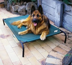 Garden-Furniture-Centre-Dog-Bed-Large-0-234x212