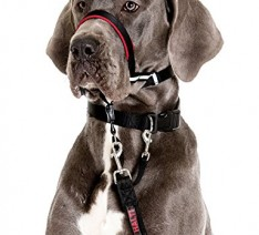 Halti-OptiFit-Headcollar-for-Dogs-L-Size-Guaranteed-To-Stop-Pulling-Optimum-Fit-0-234x212