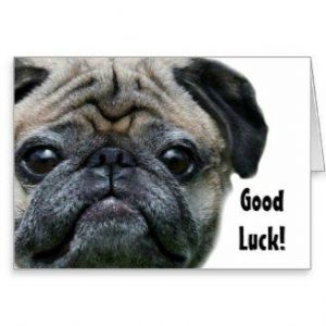 good_luck_pug_dog_greeting_card-p137344694267115510z7kni_328